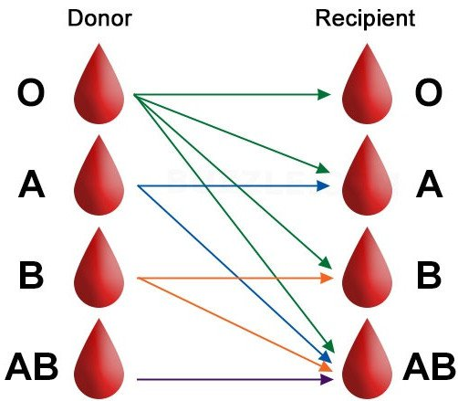أنواع فصائل الدم ومميزاتها موقع مصادر